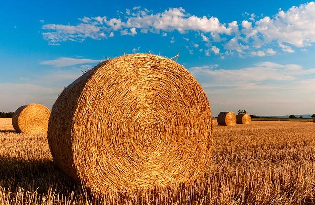 Inail,-denuncia-/-comunicazione-di-infortunio-online-per-l'agricoltura